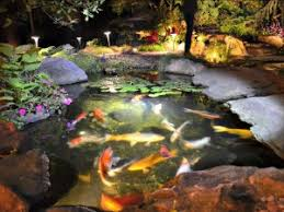 are underwater pond lights harmful to fish turpin landscaping