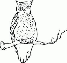 great grey owl clipart printable coloring page pencil and in