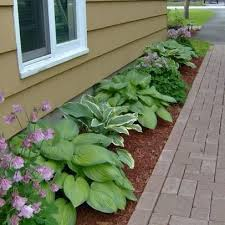 48 best hostas images on pinterest hosta gardens flower