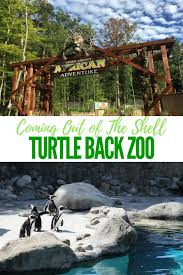 turtle back zoo light show 2017 turtle back zoo is coming out of the shell mommy university