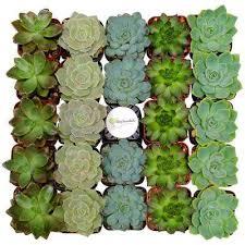 Home Depot Flower Projects - succulents u0026 cactus plants garden plants u0026 flowers the home depot