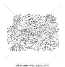rowan tree isolated white vector illustration eps