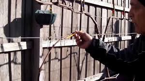training grape vines pruning creating pt8 youtube