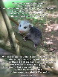 possums hashtag on twitter