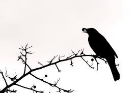 black bird silhouette clipart free clipart