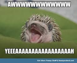 So Cute Meme - hedgehog cute meme animal funny pics pictures pic picture image
