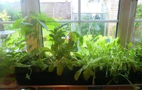 indoor windowsill planter window sill planter indoor gardening with her windowsill planting of