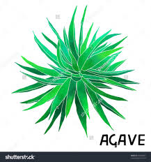 cactus home decor house plant stock vectors vector clip art shutterstock exotic bush