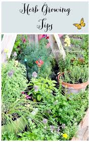 522 best herb recipes and ideas images on pinterest kitchen