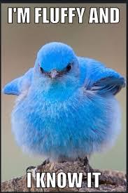 Blue Meme - 30 most funniest bird meme images and photos