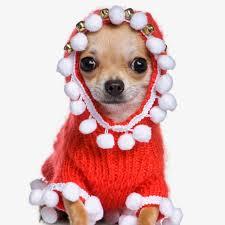 Christmas Is Coming Meme - dawgart christmas is coming