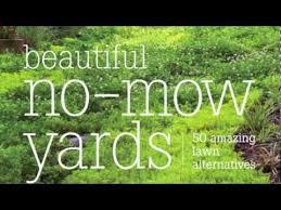 alternatives to grass in backyard beautiful no mow yards 50 amazing lawn alternatives youtube