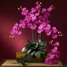 Orchid Flower Pic - 108 best phalaenopsis orchids images on pinterest phalaenopsis