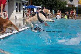 dogs have their day in the pool at these 5 doggie swims in