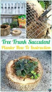 remarkable indoor succulent planter creative indoor and outdoor