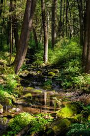 Forest Green by 924 Best Simon U0027s Forest Locations Images On Pinterest Nature