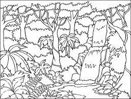 rainforest plants coloring pages businesswebsitestarter com