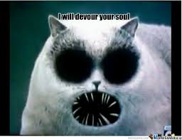 Scared Cat Meme - list of synonyms and antonyms of the word scary cats