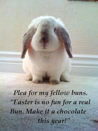 Cute Easter Meme - rabbit ramblings monday meme day rabbits at risk for easter