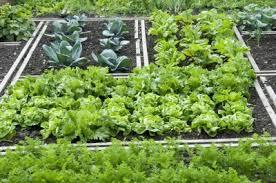 garden design garden design with how to plant a fall vegetable