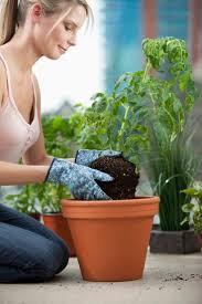 best 25 modern gardening tools ideas on pinterest diy