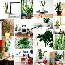 plants for office desk indoor plants for office desk online musicyou co