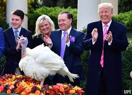 in photos pardons drumstick the national thanksgiving turkey