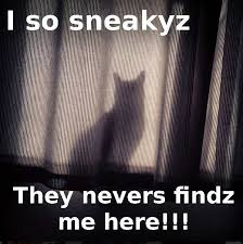 Sneaky Cat Meme - top five cat memes and cat sensing dog image 1232065 by yanito on