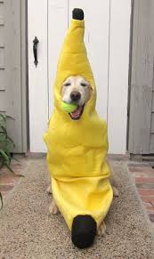 81 Best Dog Halloween Costumes Images On Pinterest Animals