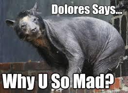 Hairless Bear Meme - hairless bear memes quickmeme