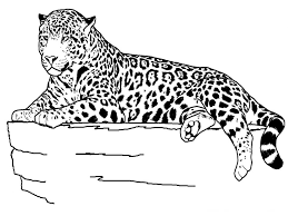 coloring sheets ideas pages animals printable zoo
