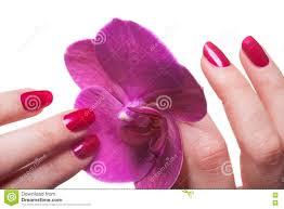 dark pink nails stock photo image 93883949