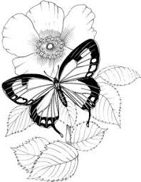 butterfly coloring pages coloring page butterflies coloring pages pinterest butterfly