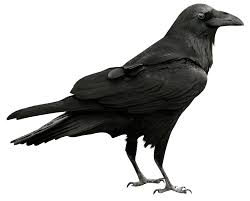 halloween border transparent background raven transparent png picture gallery yopriceville high