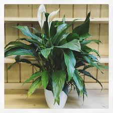 indoor plants for all light levels u2014 swansons nursery seattle u0027s