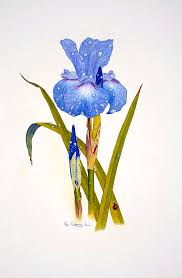 Japanese Flowers Paintings - japanese iris painting by bill gehring
