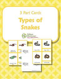 printable montessori curriculum 50 best science kingdoms images on pinterest homeschool