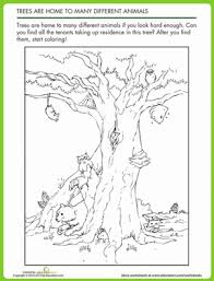 animal homes in trees worksheet education com