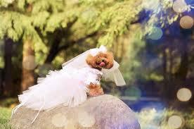 dog wedding dress custom made dog wedding dress made of soft pink tulle and cut