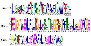 Meme Motif Search - cyclic nucleotide gated ion channel gene family in rice