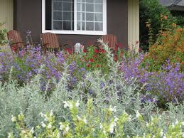 plants for xeriscaping landscaping network