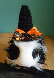 Bearded Dragon Halloween Costume Guinea Pig Witch Hat Guinea Pig Clothes Bearded Fancihorse