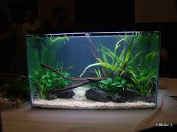 cuisine happy fish at play freshwater aquarium design ideas