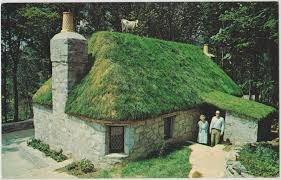 sod roof using sod to build a green roof modern homesteading