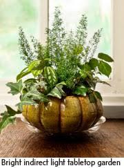 Indoor Container Gardening - bring it indoors garden center magazine