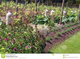 Vegetable Garden In Pots by Rhubarb Forcing Jars Or Pots In A Vegetable Garden Stock Photo