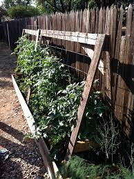 Tomatoes Trellis Vegetables What Are Inexpensive Materials For Homemade Tomato