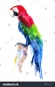 watercolor parrot stock illustration 377861035 shutterstock