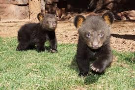 Arizona wildlife images Bearizona wildlife park top 3 reasons why you should visit jpg