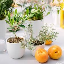 Potted Plants Wedding Centerpieces by Wedding Centerpiece Idea We Love Potted Plants Brides